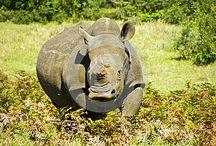 Wild African animals / Images of elephants, rhinos, zebras, antelope, warthogs, giraffes, wildebeest