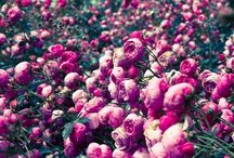 THE FLORALS . / the earth laughs in flowers .