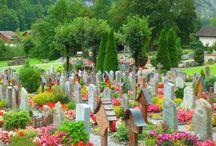 Virágba borult temetők