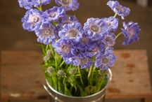Flower Varieties {Blue Flowers} / Just a selection of blue flowers available from The Flowermonger