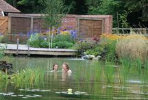 Water Gardens / Ideas and inspiration