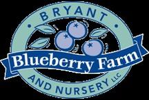 Blueberry farmer