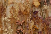 dried flowers plants