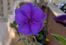 Home Gardening Photos