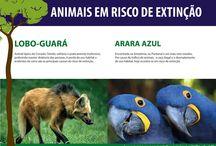 Cartilha Animais em Risco de Extinção