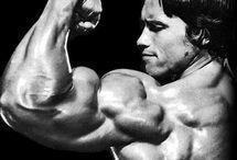 03 - rear biceps