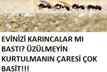 karıncalara son