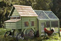 Hønsegårde