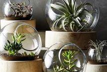 terrarium or plant stuff
