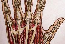Anatomy inner being