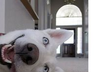 Pets :O