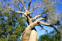 Wonderous Trees