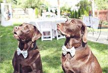 Pupile na ślubie