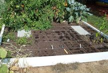 FAMILY GARDEN AND GARDENING WITH KIDS / TIPS AND IDEAS FOR GARDENING, HOMESTEADING, AND GROWING YOUR OWN FRUITS AND VEGETABLES