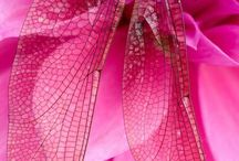 Dragonfly-Vážky :-)