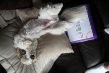 So cute ❤ / Voici mon chien Léon !