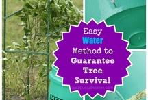 Garden tips / by Nancy Grosland