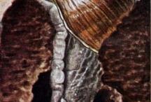 de slak