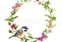 _ilustração passarinhos