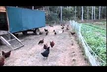 Future Hobby Farm
