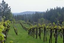 Organic Farming / Great wines begin in the vineyard!