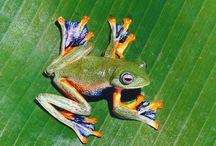 Frogs / by Darryl Tone