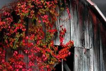 Autumn sun Barn Venue