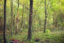 Autumn - Automne / Goûter dans les bois au début de l'automne !