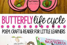 pre-school: life cycles