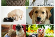 kutyák (kicsi,nagy)