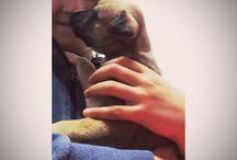 Dalila e Bianca / La storia di una bambina e il suo cane