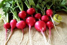 radishes / by leanne rundle