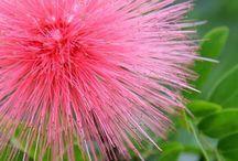 Ritka szépségű növények