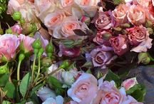 Rose / Rose idea