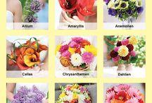 Tipps Blumen