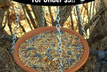 DIY for the Birds / DIY for bird houses and feeders.