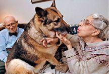 Animal Helpers & Heros
