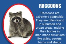 Awesome Animal Facts & Information