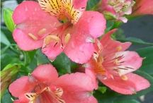 flowers...i love it