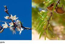 Вкусные растения / Съедобные растения - интересные фото