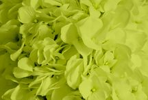 Chartreuse Weddings / Chartreuse wedding ideas. From floral and reception, to bridesmaid dresses and wedding invitations!