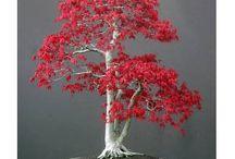 bonsai / by Erkan Akay