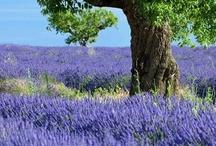 Frankrijk / Inspiratie voor een mooie vakantie naar Frankrijk.