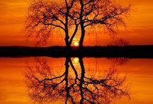 Lehdet, puut, metsä