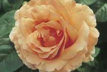 Flowers / by Cyndi Carroll-Fyke