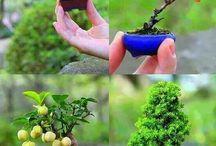 Gardening Idea / Plant