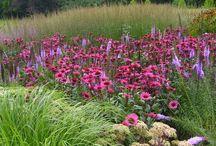 Kolor w ogrodzie Różowy
