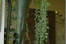 JARDIN, PLANTAS, FLOREROS / by Gabriela Martinez
