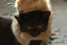 Cats & Kitties.