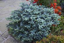 Plants - Foliage plants
